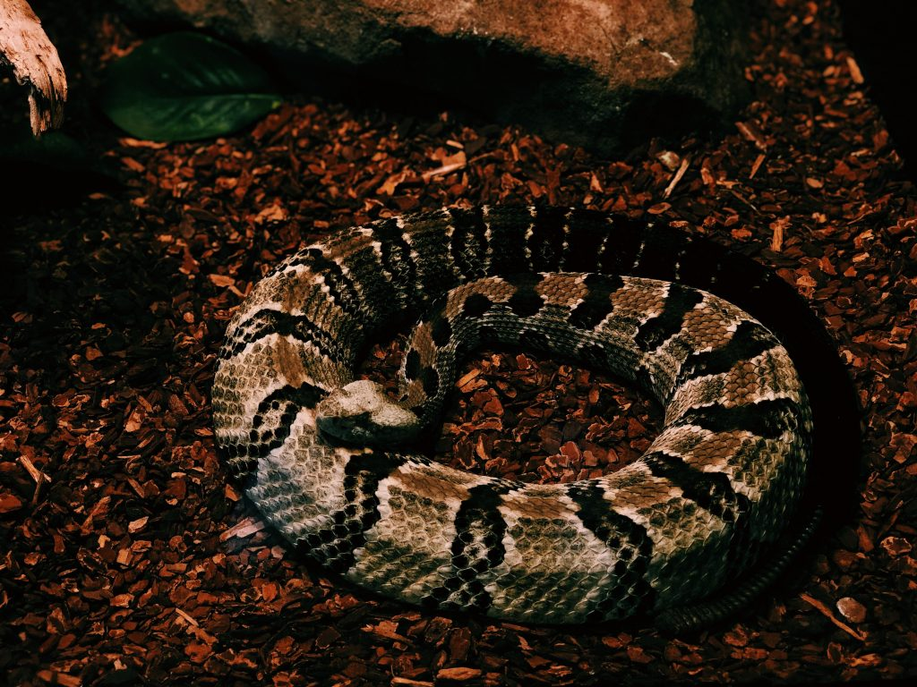 brown and black python photo