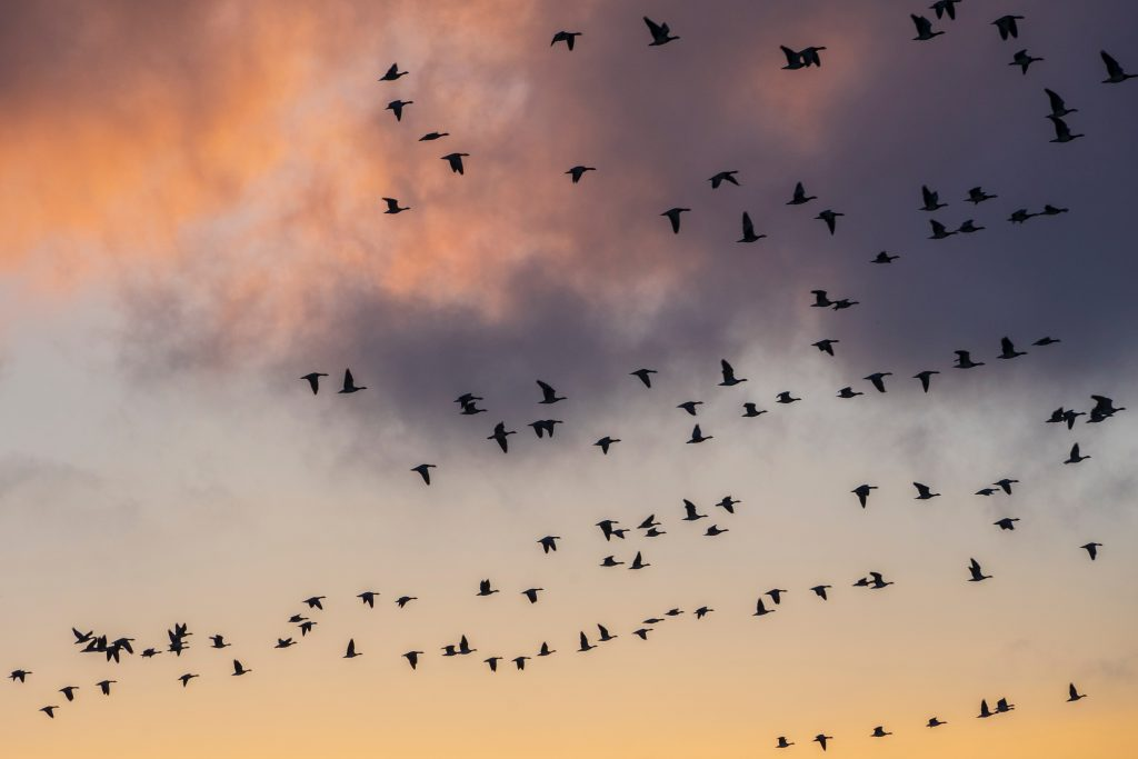 flock of birds flying during daytime